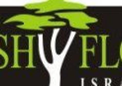 מכללת CashFlow Israel