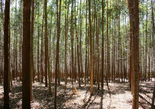 חם בבית - עצי מובחרים להסקה