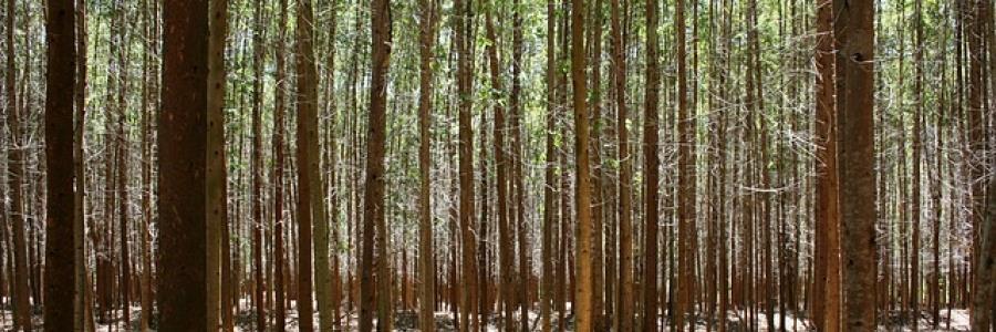 חם בבית – עצי מובחרים להסקה