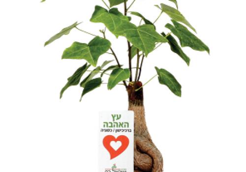 מתנות לסוף השנה, עציצים ממותגים מזכרת נפלאה, מתנות למורים ותלמידים