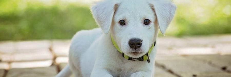 מחפשים מזון לגורי כלבים? הנה כמה טיפים מחברת יוקנובה!