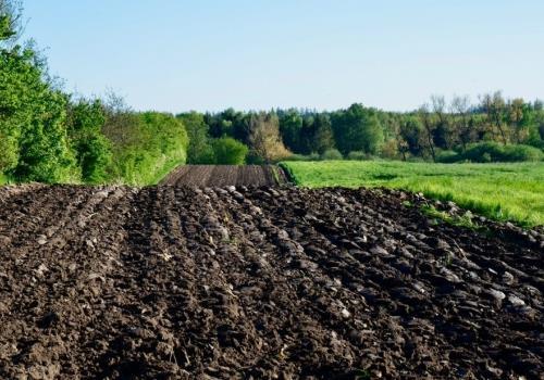 האם דשנים אורגניים מתאימים לחקלאות הידרופונית?