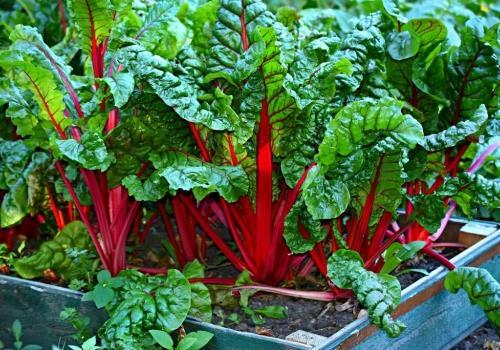 המחלוקת בשיאה: האם יש טעם לחזור לחקלאות אורגנית?