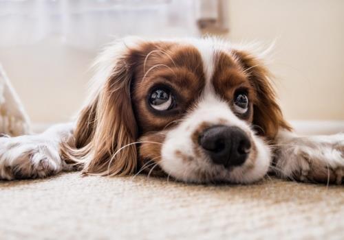אימוץ כלבים – לעשות את זה נכון