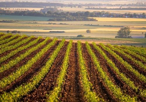 קרקעות למכירה – האם זו באמת השקעה טובה?