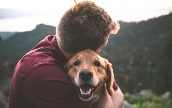 חוק ייבוא כלבים והמשמעויות שלו